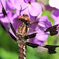 Dragonfly by Joe  Ng