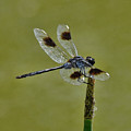 Dragonfly by Keith Lovejoy