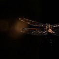 Dragonfly by Laschon Johannes