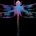 Dragonfly by Maciej Mackiewicz