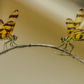 Dragonfly Meetup by Wolfgang Stocker