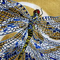 Dragonfly On Gold Scarf by Susan Kubes