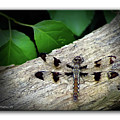 Dragonfly On Log by Brian Wallace