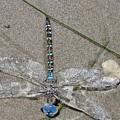 Dragonfly On The Beach by Liz Vernand