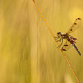 Dragonfly Pole Dance by Christina VanGinkel