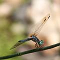 Dragonfly Ref.13 by Robert Sander