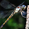 Dragonfly Revisited by Kenneth Albin