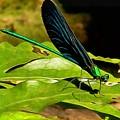 Dragonfly by Sergey Lukashin