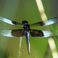 Dragonfly by Steve Marler