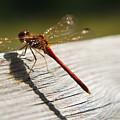 Dragonfly by Steve Somerville