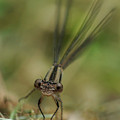 Dragonfly Up Close by Barbara Treaster