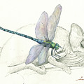 Dragonfly With Chameleon by Juan Bosco