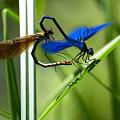 Dragoonfly by Peteris Vaivars