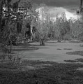 Drama In The Swamp II-black And White by Suzanne Gaff