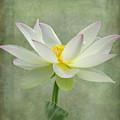Dramatic Lotus  by Sabrina L Ryan