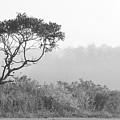 Dramatic Tree by Susan Arness