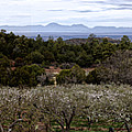 Draney Orchard Pano by Diana Powell