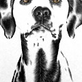 Drawing Of A Dalmatian Dog by Lisa Marie Szkolnik