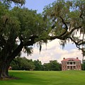 Drayton Hall Plantation Charleston by Susanne Van Hulst