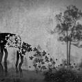 Dream 5111a by Rudy Umans