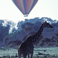 Dream Adventure In Kenya by Carl Purcell