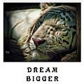 Dream Bigger by Traci Cottingham