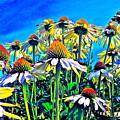 Dream Field by Gwyn Newcombe