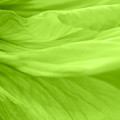 Dream Green by Angela Doelling AD DESIGN Photo and PhotoArt