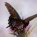 Dream Of A Butterfly by Rima Biswas