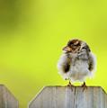 Dream Sparrow by Betty LaRue