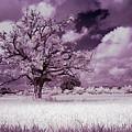 Dream Tree by Galeria Trompiz