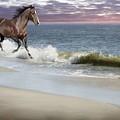 Dreamer On The Beach by Barbara Hymer