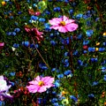 Dreamgarden by RC DeWinter