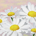 Dreaming Of Daisies by Laura D Young