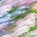 Dreaming Of Flowers 1 by Marilyn Hunt
