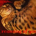 Dreaming Of You  by Barbara Griffin