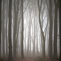 Dreamscape Forest by Simon Garratt