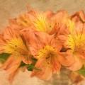 Dreamy Autumn Bouquet  by Kim Hojnacki