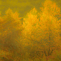 Dreamy Autumn by Don Schwartz