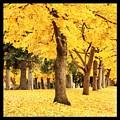 Dreamy Autumn Gold by Carol Groenen