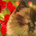 Dreamy Cat With Geranium 2015 by Kathryn Strick
