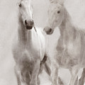 Dreamy Horses by Michele A Loftus