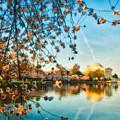 Dreamy Jefferson And Flowers by Mark Dodd