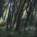 Dreamy Marjan Forest In Croatia by Sven Brogren