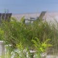 Dreamy Morning Walk On The Beach by Mary Lou Chmura