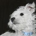 Dreamy Puppy by Terri Waters