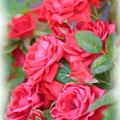 Dreamy Red Roses - Digital Art by Carol Groenen