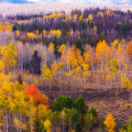 Dreamy Rocky Mountain Autumn View by James BO Insogna