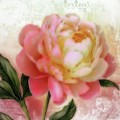 Dreamy Rose by Elizabeth Mix