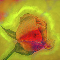 Dreamy Rose Fantasy #h2 by Leif Sohlman